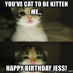 Adorable Kitten - you've cat to be kitten me... happy birthday jess!
