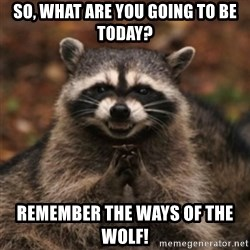 evil raccoon - So, what are you going to be today? Remember the ways of the wolf!