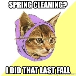 Hipster Cat - Spring Cleaning? I did that last fall