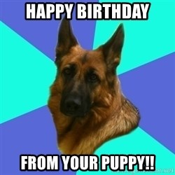 German shepherd - Happy Birthday from your puppy!!