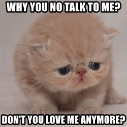Super Sad Cat - Why you no talk to me? Don't you love me anymore?