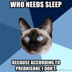 Chronic Illness Cat - Who needs sleep Because according to prednisone, I don't.