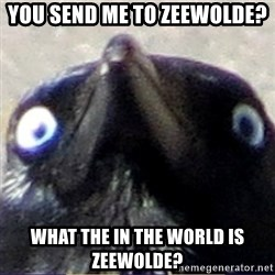 insanity crow - You send me to Zeewolde? WHat the in the world is Zeewolde?