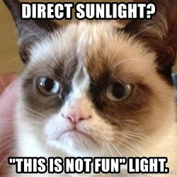 """Angry Cat Meme - Direct sunlight? """"this is not fun"""" light."""