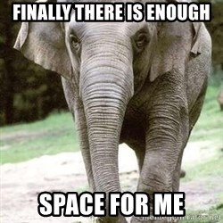 Eating Disordered Elephant  - Finally there is enough space for me