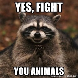 evil raccoon - Yes, fight you animals