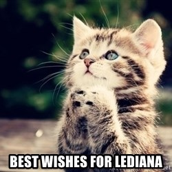 good luck cat -  best wishes for lediana