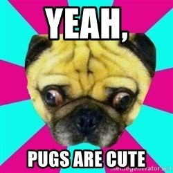 Perplexed Pug - Yeah, pugs are cute