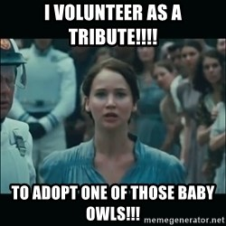 I volunteer as tribute Katniss - i volunteer as a tribute!!!! to adopt one of those baby owls!!!