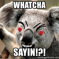 Abortion Koala - WHATCHA SAYIN!?!
