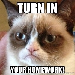Angry Cat Meme - TURN IN YOUR HOMEWORK!