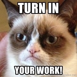 Angry Cat Meme - turn in your work!