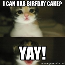 Adorable Kitten - I can has birfday cake? YAY!