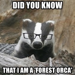 Nerdy Badger - Did you know That I am a 'Forest Orca'