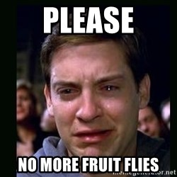 crying peter parker - Please No more fruit flies