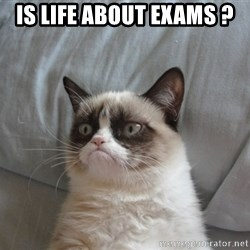 Grumpy cat good - is life about exams ?
