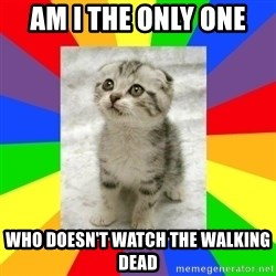 Cute Kitten - AM I THE ONLY ONE  WHO DOESN'T WATCH THE WALKING DEAD