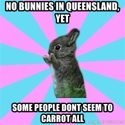 yAy FoR LifE BunNy - No bunnies in queensland, yet  SOme people dont seem to carrot all