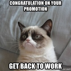 Grumpy cat good - congratulation on your promotion get back to work