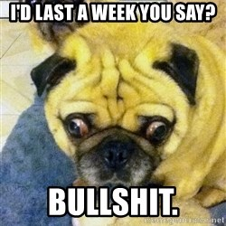 Perplexed Pug - I'd last a week you say? Bullshit.