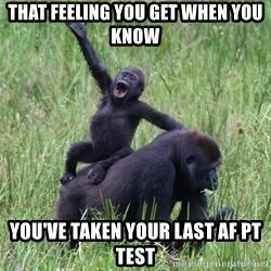 Happy Gorilla - That feeling you get when you know You've taken your last AF PT Test