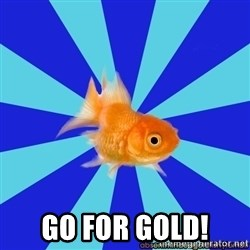 Absentminded Goldfish -  GO FOR GOLD!