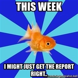Absentminded Goldfish - This week i might just get the report right..
