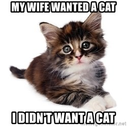 fyeahpussycats - My wife wanted a cat I didn't want a cat