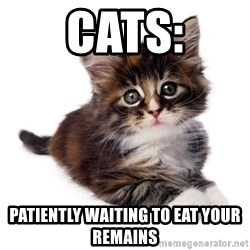 fyeahpussycats - CATS: Patiently waiting to eat your remains