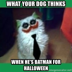 It's simple, we kill the Batman. - What your dog thinks when he's batman for halloween