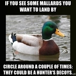 good advice duck - If you see some mallards you want to land by Circle around a couple of times: they could be a hunter's decoys.