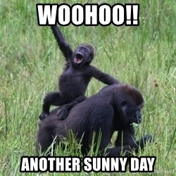 Happy Gorilla - WOOHOO!! another sunny day