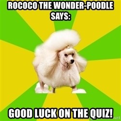 Pretentious Theatre Kid Poodle - Rococo the Wonder-Poodle Says: Good luck on the Quiz!