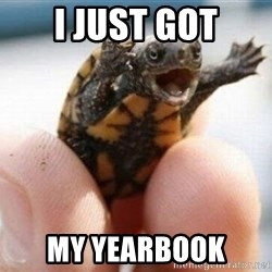 angry turtle - I just got my yearbook