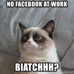 Grumpy cat good - NO FACEBOOK AT WORK BIATCHHH?