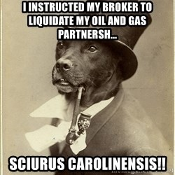 rich dog - I instructed my broker to liquidate my oil and gas partnersh... SCIURUS CAROLINENSIS!!