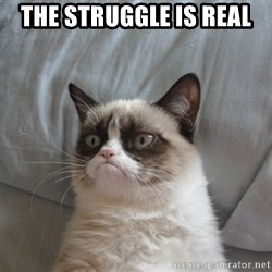 Grumpy cat good - the struggle is real