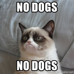 Grumpy cat good - No Dogs No Dogs
