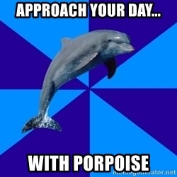 Drama Dolphin - Approach your day... with porpoise