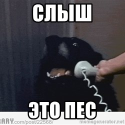Hello This is Dog - СЛЫШ ЭТО ПЕС
