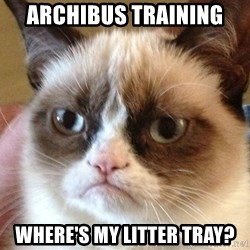 Angry Cat Meme - Archibus training where's my litter tray?