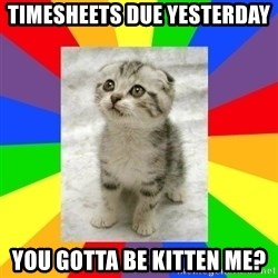 Cute Kitten - timesheets due yesterday  you gotta be kitten me?