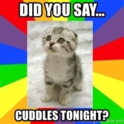 Cute Kitten - did you say... cuddles tonight?