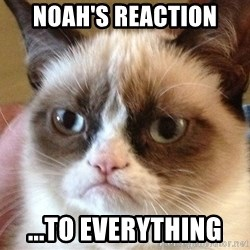 Angry Cat Meme - Noah's reaction  ...to everything