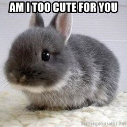 ADHD Bunny - am i too cute for you