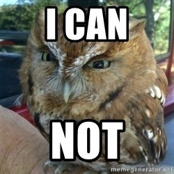 Overly Angry Owl - I can not