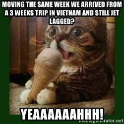 lil bub - Moving the same week we arrived from a 3 weeks trip in Vietnam and still jet lagged? YEAAAAAAHHH!