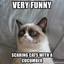 Grumpy cat good - very funny scaring cats with a cucumber