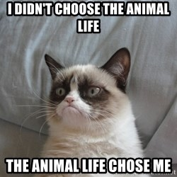 Grumpy cat good - I didn't choose the animal life the animal life chose me