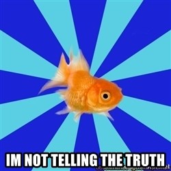 Absentminded Goldfish -  im not telling the truth